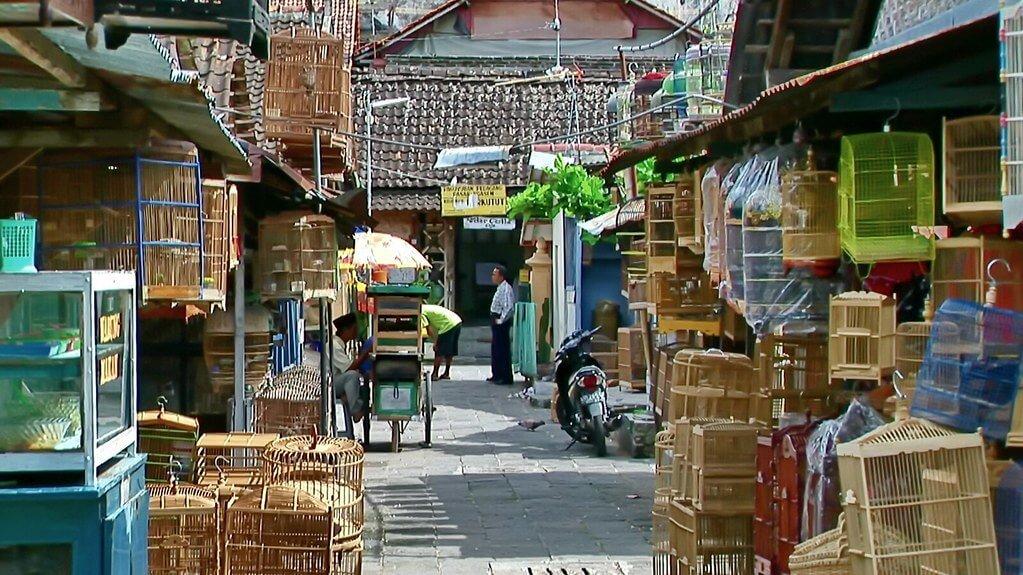The Muntilan bird market